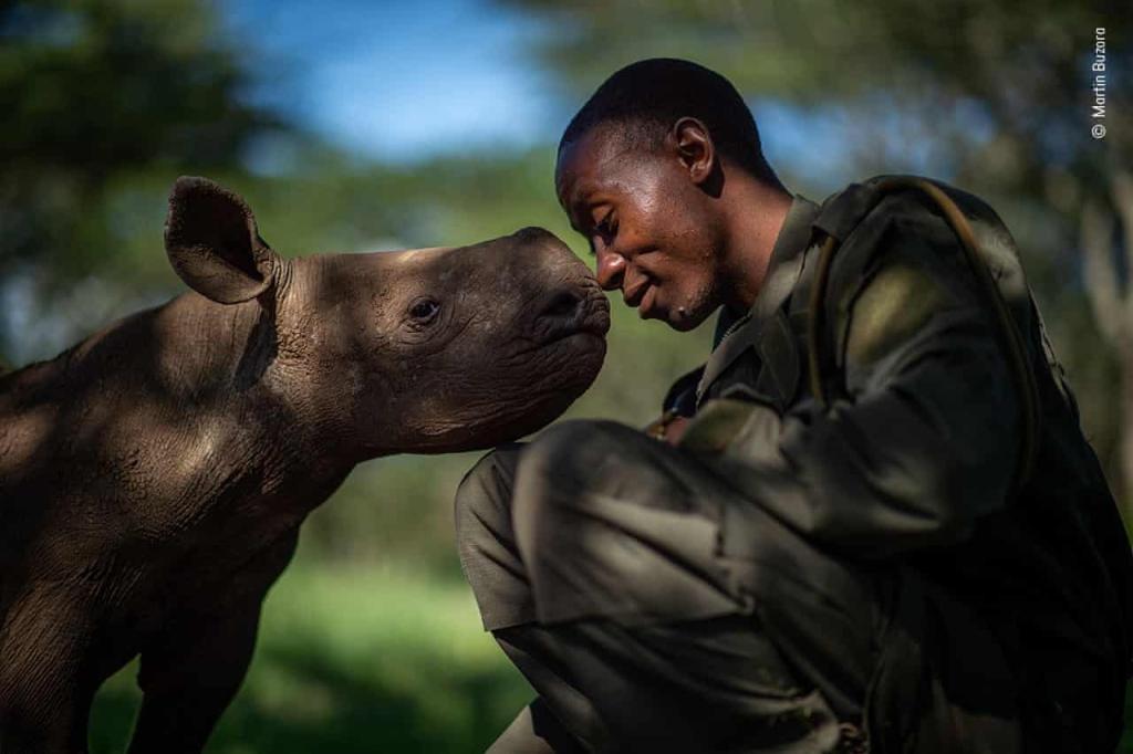 Na slici, s lijeve strane, nalazi se bebi nosoroga. S desne strane, čovjek. Nosovi im dodiruju. Pozadina fotografije je zamagljena.